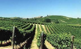 """Agricoltura. Risoluzione PD: """"Lambrusco, contrastare proposta liberalizzazione dei vitigni in UE"""""""