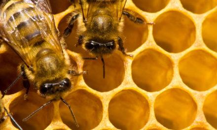 """Apicoltura: 2 milioni per il programma triennale regionale. Francesca Marchetti: """"La Regione investe e continua a sostenere il settore apistico"""""""