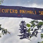 Centri di recupero animali selvatici: Bagnari presenta una risoluzione in Regione