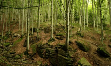Turismo, cultura e ambiente: cinque progetti finanziati in provincia di Forlì-Cesena