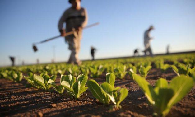 Agricoltura. Il PD in Regione chiede di migliorare le procedure per le domande di contributo