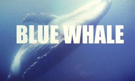 """Blue Whale. Montalti: """"Educare i giovani all'utilizzo consapevole dei social è la prima forma per proteggerli"""""""