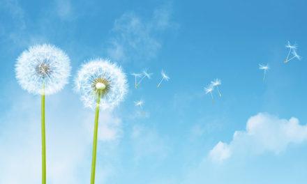 Piano antismog nel bacino padano: azioni e risorse per migliorare l'aria