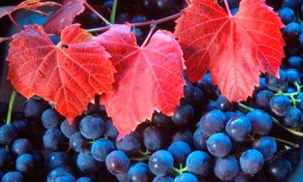 """Settore vitivinicolo. Bessi: """"Il futuro del comparto è dato dal rispetto delle regole e dal rinnovo degli impianti"""""""