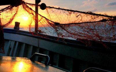 """Pesca e turismo, Rontini: """"La Giunta si attivi per il regolamento del settore"""""""