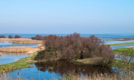 Delta del Po. Soddisfazione da parte di Marcella Zappaterra per l'approvazione dell'emendamento per il Parco unico