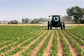 """Misurazioni errate terreni agricoli. Bagnari: """"La Regione intervenga per evitare sanzioni agli agricoltori incolpevoli"""""""