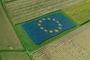 """Olio d'oliva, carni bovine e seminativi. Bessi: """"Dalla UE incentivi per l'aggregazione dei produttori"""""""