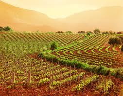 """Nadia Rossi: """"Aiuti all'agricoltura: dalle parole ai fatti"""""""