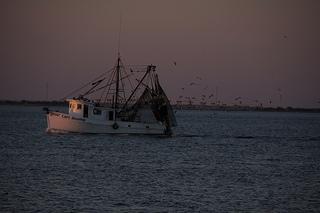 Pesca. Criticità nella legge 11/2012. Una risoluzione PD-Lega impegna la giunta a modificarla