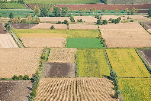"""Consultazione pubblica sulla politica agricola comunitaria. Bessi: """"Un'occasione per il territorio"""""""