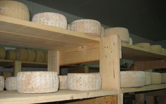 Risoluzione bipartisan per difendere la produzione lattiero-casearia