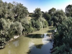 """Rontini: """"Fiumi e torrenti: pericoli da evitare o luoghi di incontro e confronto?"""""""