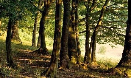 """Nuovo piano forestale. Cardinali: """"Un passo in avanti nella collaborazione tra pubblico e privato"""""""
