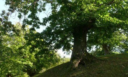 """Piano forestale. Poli e Marchetti: """"Tutela e valorizzazione dei boschi di castagno"""""""