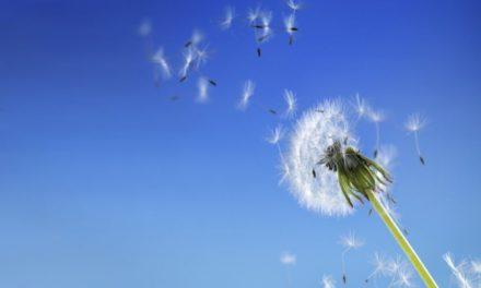 Ambiente e qualità dell'aria: la Regione definisce gli interventi fino al 2020