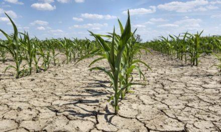 """Siccità. Lori e Iotti: """"Anticipare le erogazioni degli aiuti comunitari e in particolare della Pac per le aziende agricole in difficoltà a causa della siccità"""""""