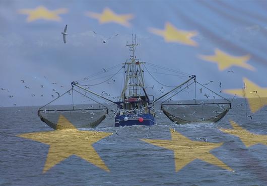 """Fondo Europeo per gli Affari Marittimi e la pesca (FEAMP). Rossi: """"Liquidare al più presto i contributi 2016"""""""