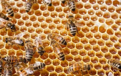 Tutela delle api e dell'ambiente, approvata la nuova legge regionale sull'apicoltura
