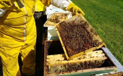 Crisi produzione apicoltura