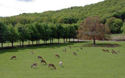 Parma, il parco del Monte Fuso entra nel Parco regionale delle Valli