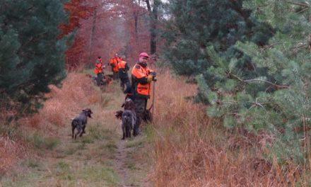 Caccia. Risoluzione Pd per la tutela della caccia di braccata