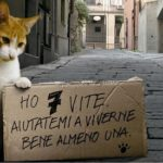 Azioni a contrasto del randagismo felino. La Consigliera Nadia Rossi deposita una risoluzione in merito