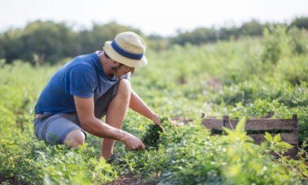 Agricoltura: nuovi fondi per i giovani agricoltori grazie alla Regione